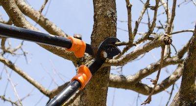 tree pruning Austin, TX